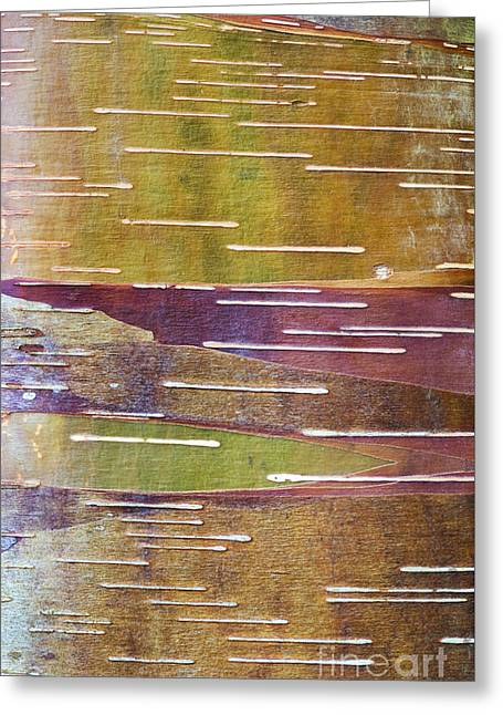 Chinese Red Bark Birch Greeting Card