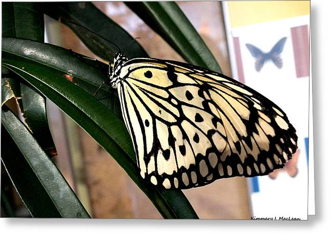 Chinese Yellow Swallowtail Greeting Card