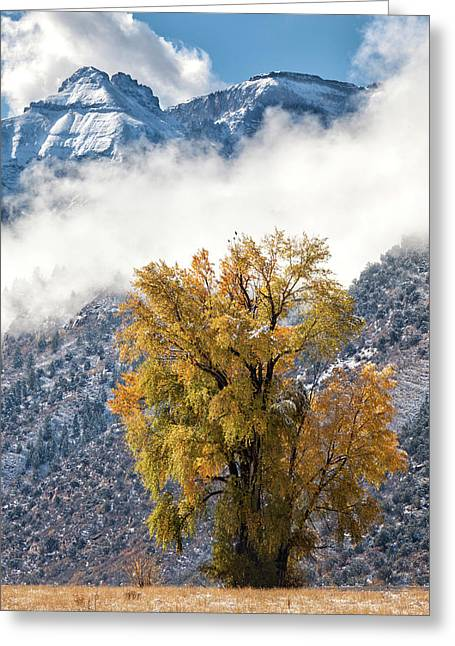 Chipeta And Cottonwood Greeting Card