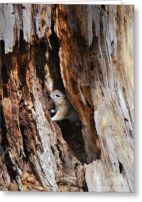 Chipmunk - Eager Arizona Greeting Card by Donna Greene