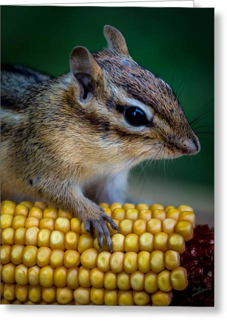 Chipmunk Goes Wild For Corn Greeting Card