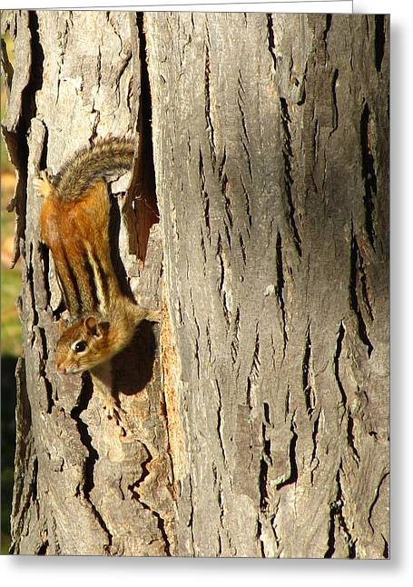 Chipmunk In Fall Greeting Card