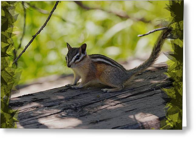 Chipmunk In The Shade Greeting Card