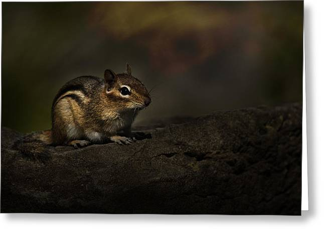 Greeting Card featuring the photograph Chipmunk On Rock by Michael Cummings