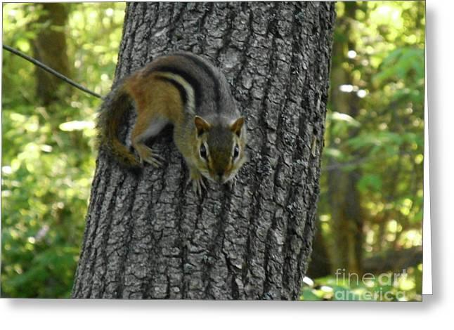 Chipmunk On Tree Greeting Card