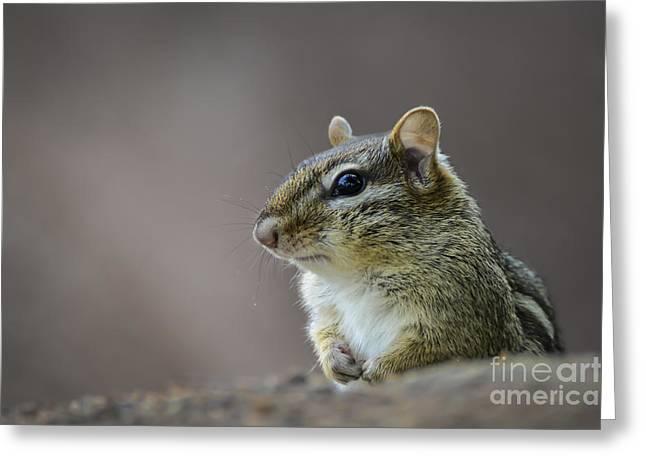Chipmunk Profile Greeting Card
