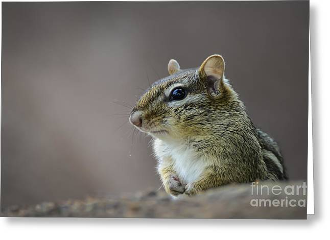 Chipmunk Profile Greeting Card