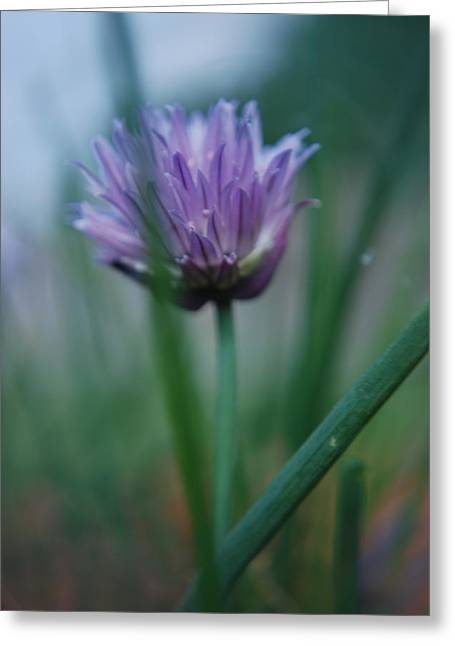 Chive Flower 2 Greeting Card by Lisa Gabrius
