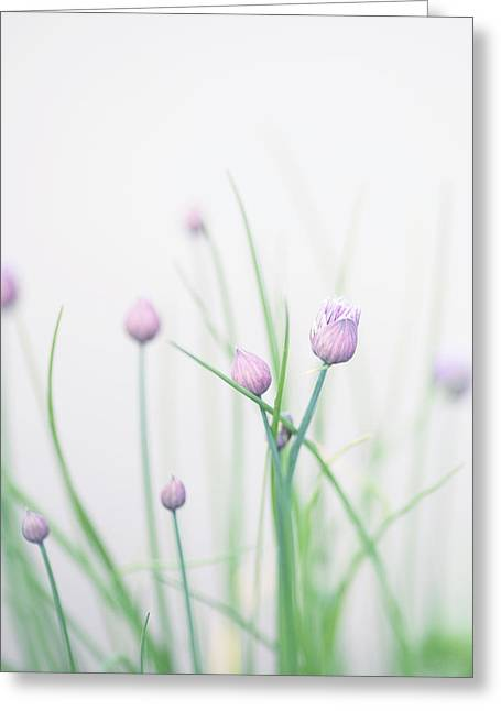 Chives 2 Greeting Card by Rebecca Cozart