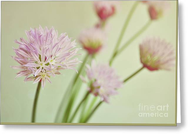 Chives In Flower Greeting Card