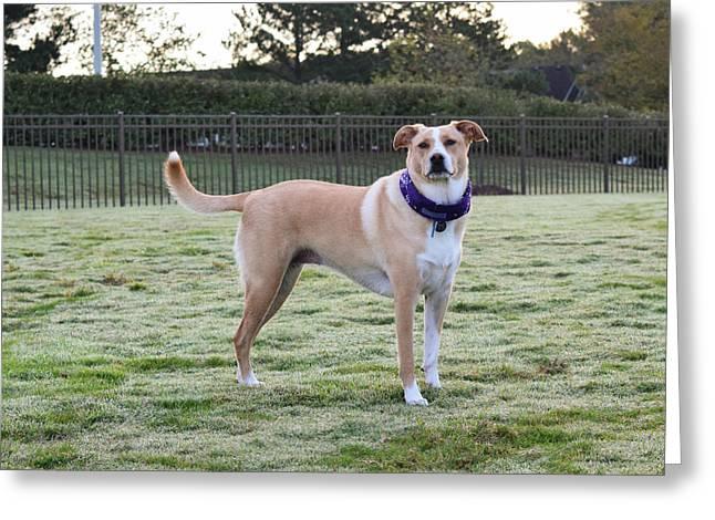Chloe At The Dog Park Greeting Card
