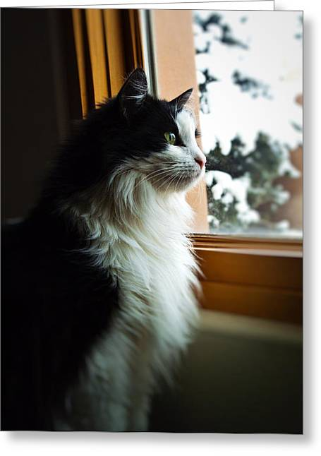 Greeting Card featuring the photograph Chloe In Winter Window by Paul Cutright
