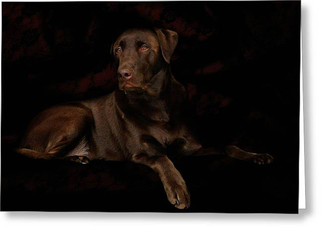 Chocolate Lab Dog Greeting Card by Christine Till