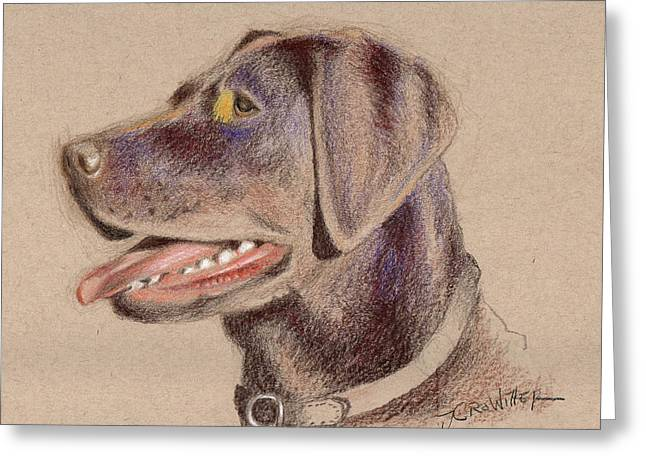 Chocolate Lab Greeting Card by John Crowther