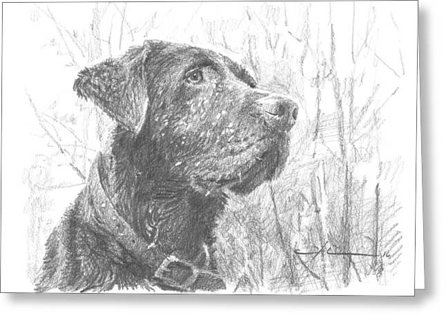 Chocolate Labrador In Woods Drawing Greeting Card by Mike Theuer