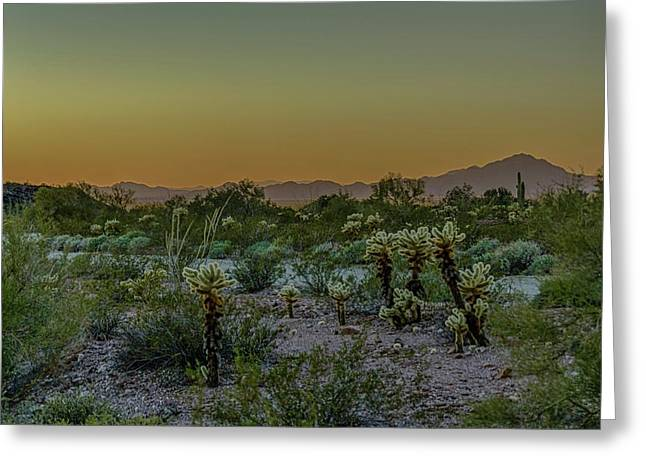 Cholla Desert Sunset Greeting Card