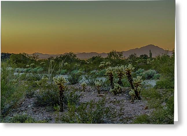 Cholla Desert Sunset Greeting Card