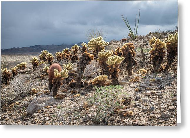 Cholla Family With Guests Greeting Card