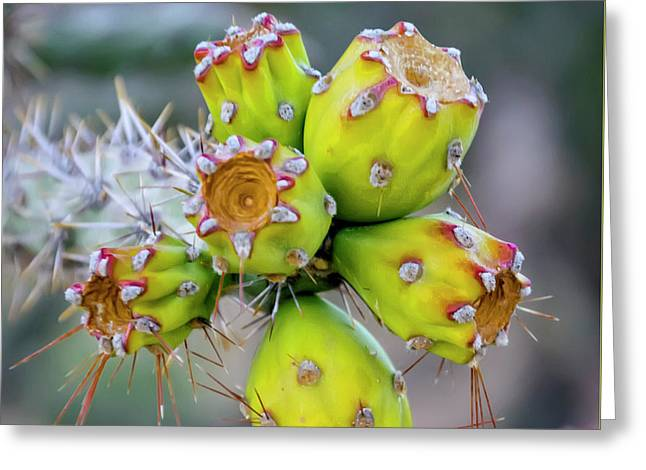 Greeting Card featuring the photograph Cholla Fruit S48 by Mark Myhaver