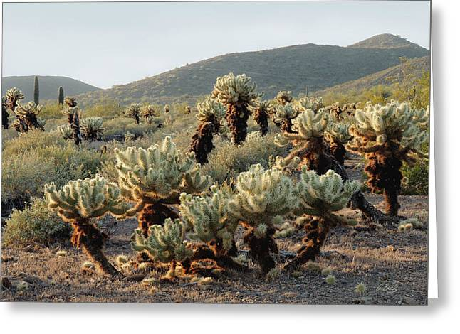 Cholla Patch Greeting Card