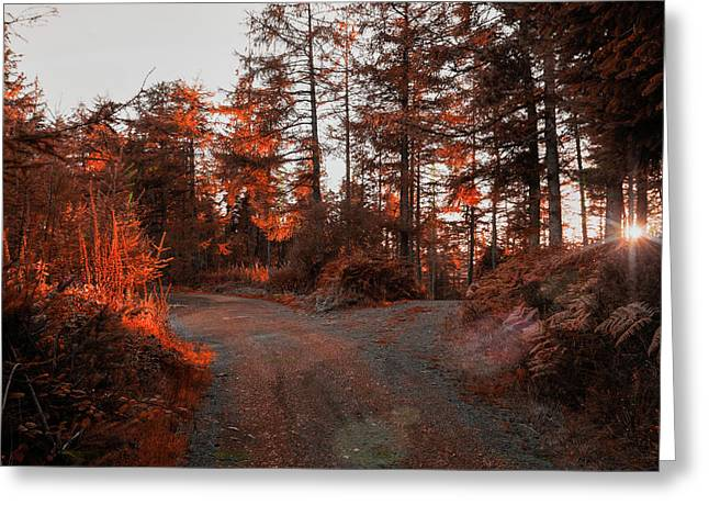 Choose The Road Less Travelled Greeting Card