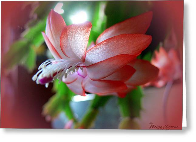 Christmas Cactus Greeting Card by EricaMaxine  Price