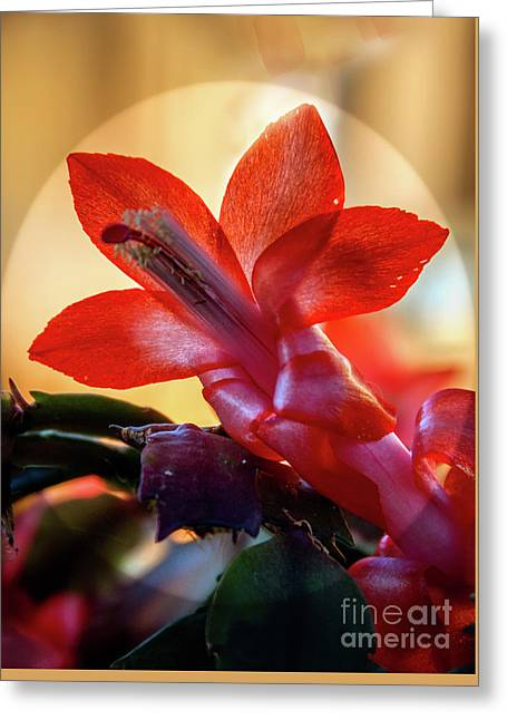 Christmas Cactus Flower Greeting Card by Robert Bales