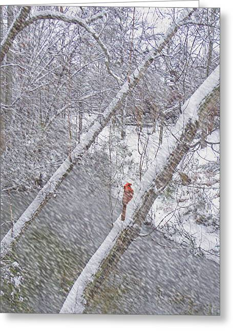 Christmas Card - Cardinal In Tree Greeting Card by Larry Bishop