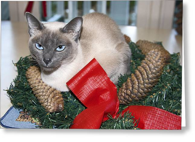 Christmas Cat Greeting Card by Sally Weigand