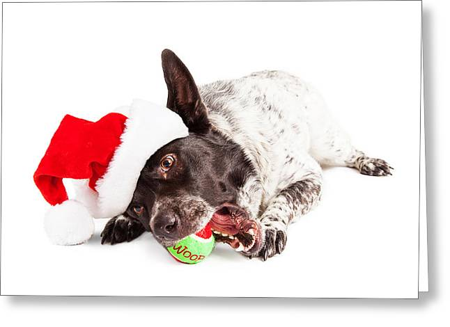 Christmas Dog Chewing On Tennis Ball Greeting Card by Susan Schmitz