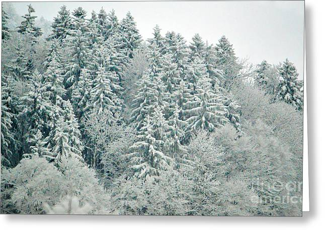Christmas Forest - Winter In Switzerland Greeting Card by Susanne Van Hulst