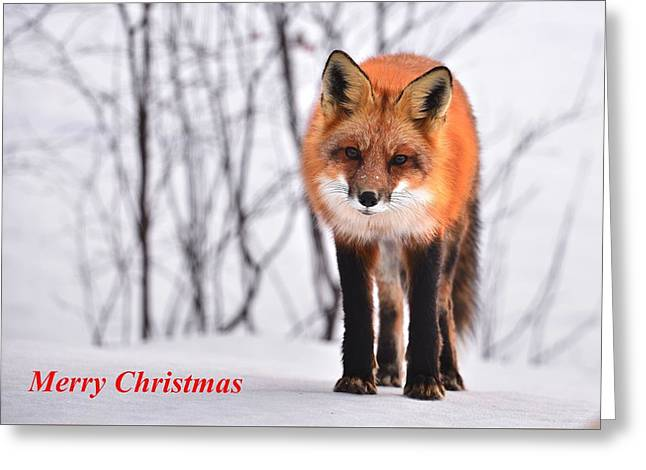 Christmas Fox Greeting Card by FL collection