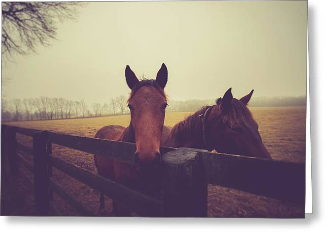 Greeting Card featuring the photograph Christmas Horses by Shane Holsclaw