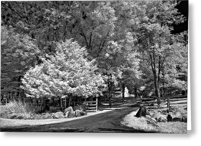 Snow Tree Prints Digital Greeting Cards - Christmas in July Greeting Card by Steve Harrington