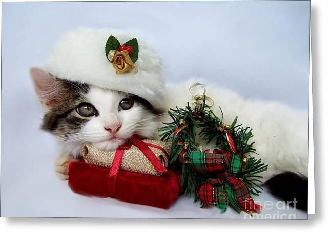 Christmas Kitten Greeting Card by Jai Johnson