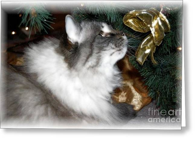 Christmas Kitty Greeting Card by Debbi Granruth