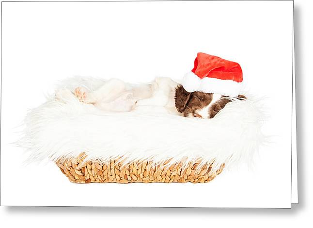 Christmas Puppy Sleeping In Basket Greeting Card by Susan Schmitz