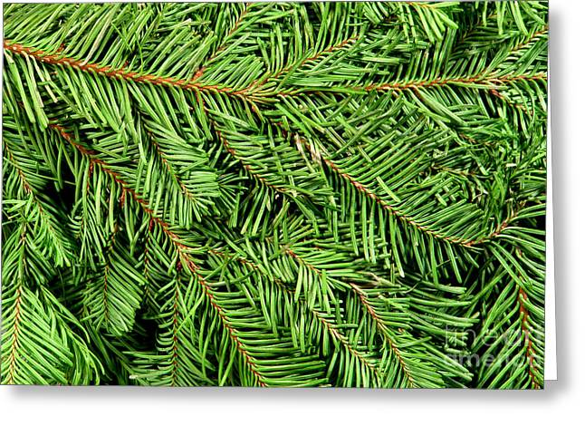 Christmas Tree Branch Background Greeting Card by Olivier Le Queinec