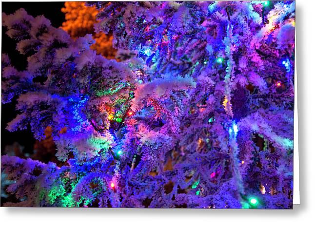Christmas Tree Night Decoration Greeting Card