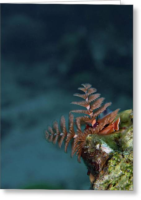Christmas Tree Worm Lookout Greeting Card by Jean Noren