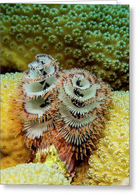 Christmas Tree Worms Greeting Card by Jean Noren