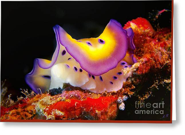 Chromodoris Kunei Nudibranch  Greeting Card by Sergey Lukashin