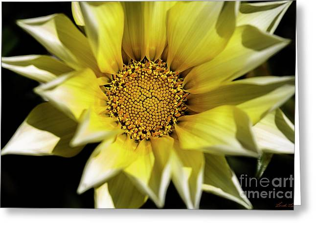 Greeting Card featuring the photograph Chrysanthos by Linda Lees