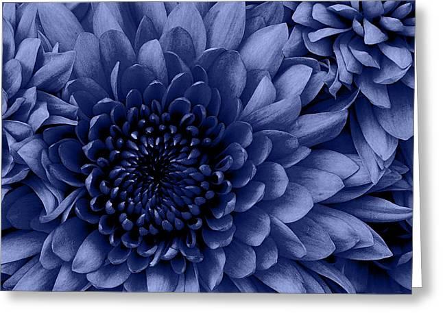 Chrysanthemum Blue Greeting Card by Amanda Schambon