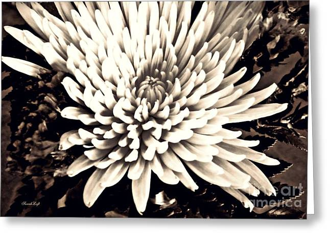 Chrysanthemum In Sepia 2  Greeting Card