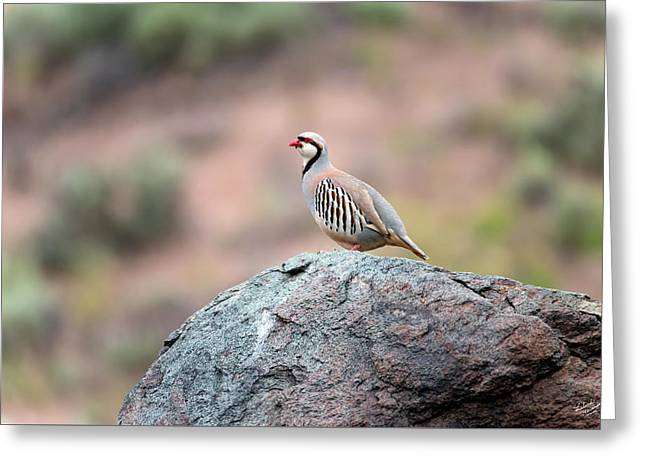 Greeting Card featuring the photograph Chukar Partridge 2 by Leland D Howard