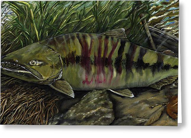 Chum Salmon Greeting Card