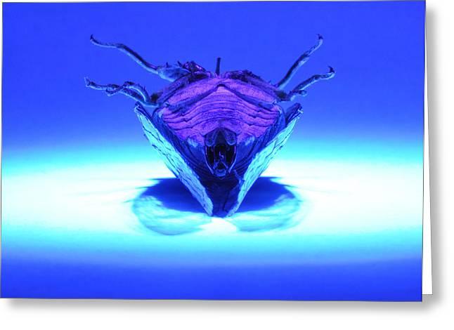 Cicada In Uv Greeting Card