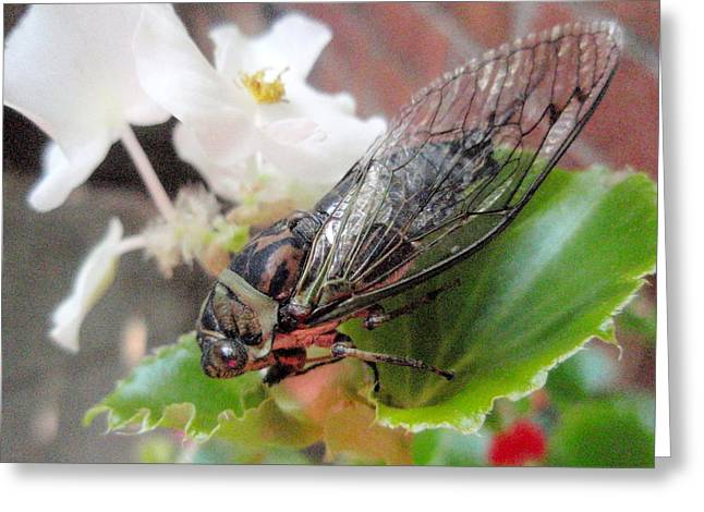 Greeting Card featuring the photograph Cicada On Flower by Beth Akerman