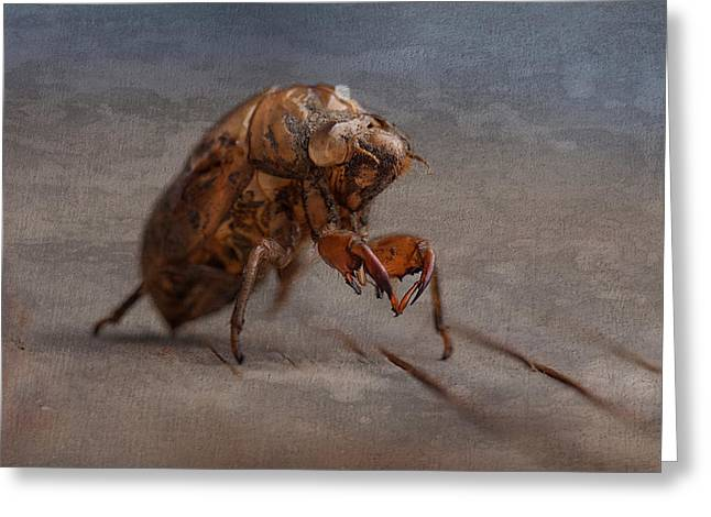 Cicada Shell Greeting Card by Tom Mc Nemar